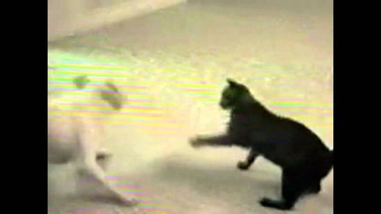 Cats Vs Dogs very funny video