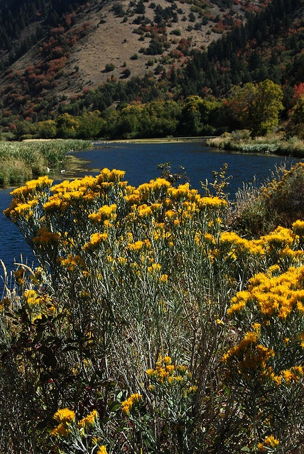Early Fall At Second Dam In Logan Canyon by Bachspics, via Flickr