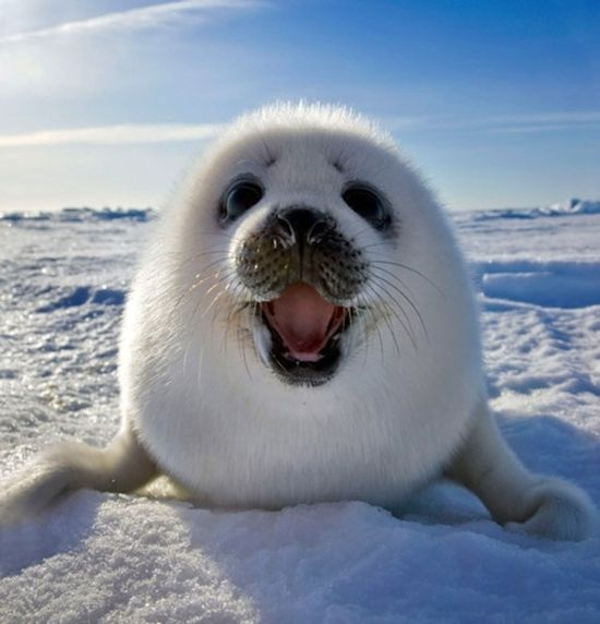 Baby Seal. See More Animals Who Are Delighted To See You @ www.buzzfeed.com/...