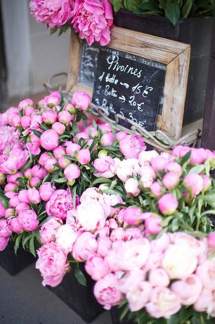 gorgeous peonies in paris // by sweet sophie learmont