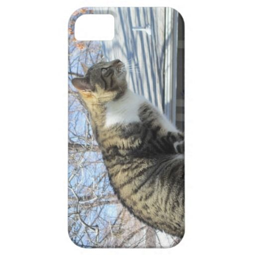 Handsome Tabby iPhone Cover