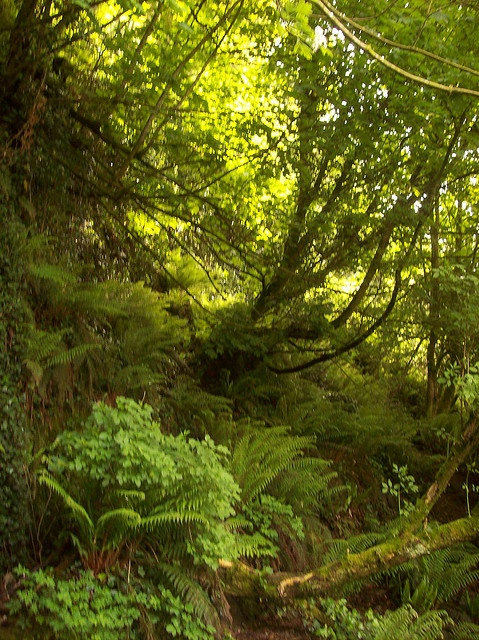 Forest, Cork County, Ireland... the place in Ireland I need to go back to