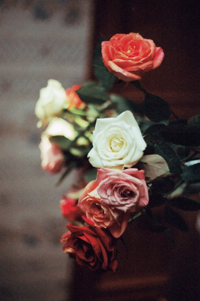 roses from home (by milki.c)