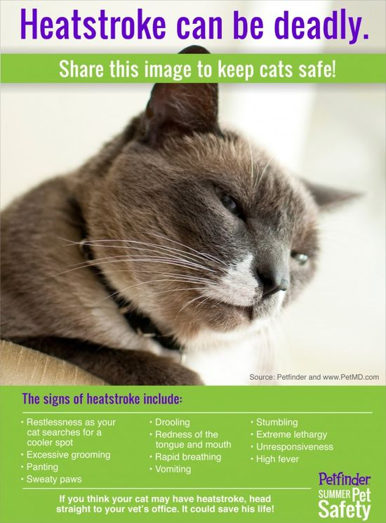 Heatstroke can be deadly. Learn the signs of heatstroke in cats and share this image to keep cats safe!