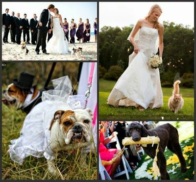 Cute pets at weddings
