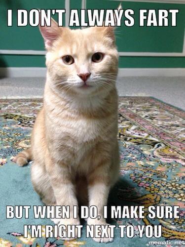 Cat farts.