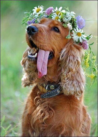 Nature dog ?