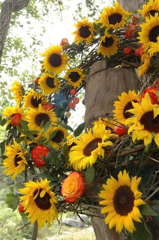 Sunflowers.../