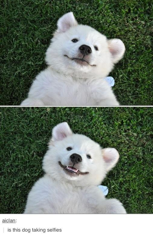 #puppy #selfie