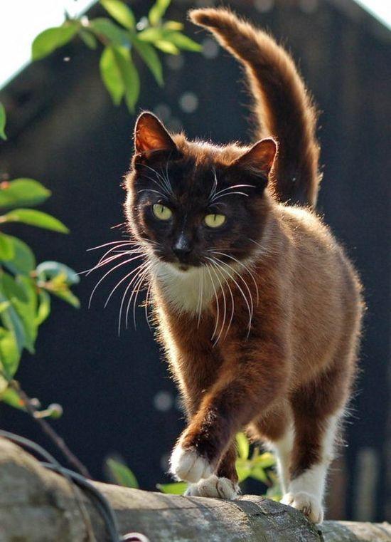 Beautiful brown kitty