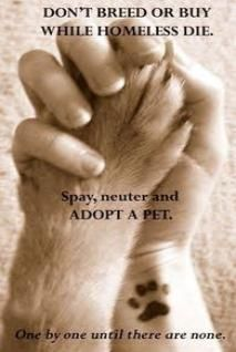 I'm a big advocate for spaying & neutering. In my opinion, backyard breeders are the most irresponsible of all pet owners. Please help save the lives of the homeless pets in the shelter and be a responsible pet owner. Spay, neuter and rescue! (and I really dig the paw print tattoo on the wrist)