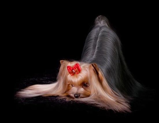 Куче-манекен
