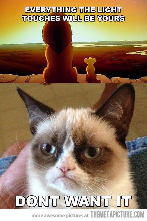 Grumpy Cat. hahaha