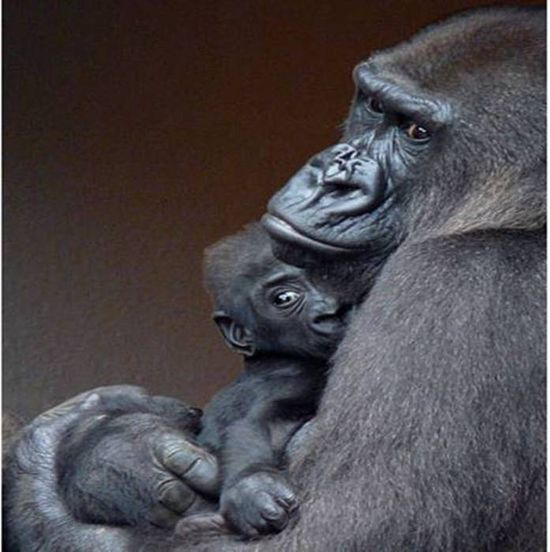 #Amazing #animals