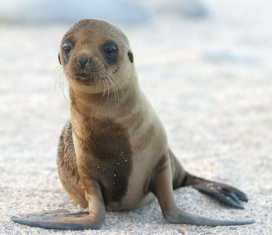 #PinUpLive >>> 10 Best Reasons to Take the Kids to the Galapagos