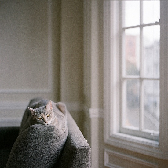 a cat's life; by Cinnamon via flickr