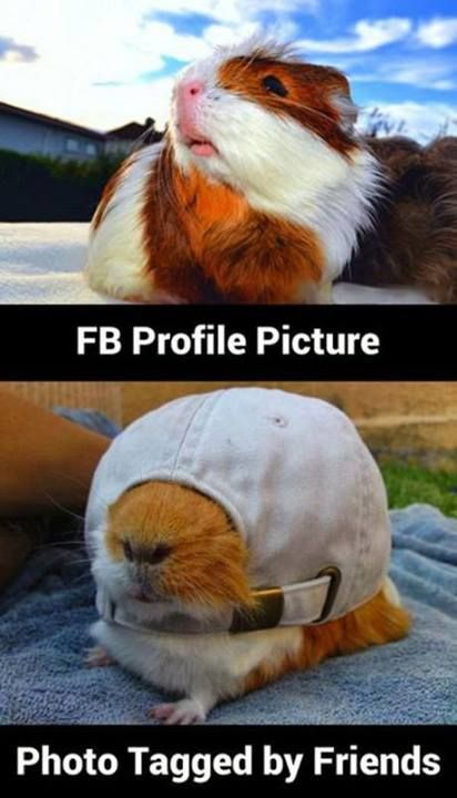 Gallery: 50 funny photos to get you through the day