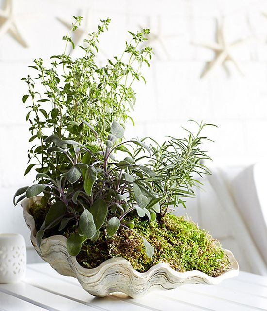 For a beachy take on potted herbs, try planting in a large shell. Learn how to: www.onekingslane....