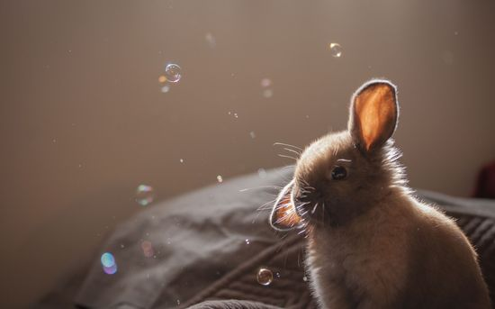 Bunny and bubbles