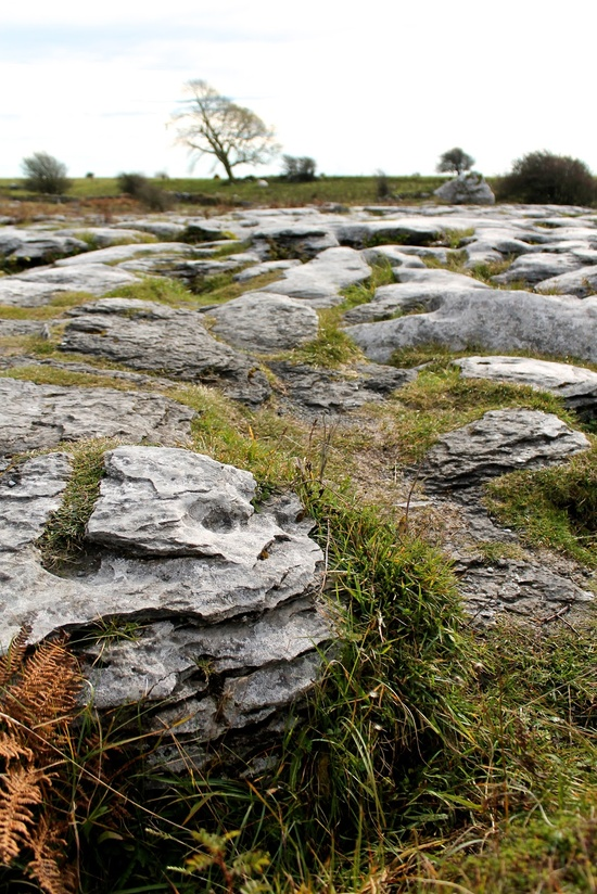 The Burren, Ireland #travel #outdoors