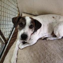 FLORIDA ~ URG'T ~ meet Petey a neutered housetrained UTD shots #adoptable #Hound Dog in Winter Haven. Petey is an older boy who loves his bed. He knows how to sit and lay down for a great picture. Humane Society of Polk Cnty ~ OFFICE PHONE: [863] 324-5227 • FAX: [863] 325-8905  ADDRESS: 555 SAGE ROAD • WINTER HAVEN, FL • 33881  HOURS: TUES-SAT 10AM-5PM • KENNEL CLOSES AT: 4PM --pin 12/30