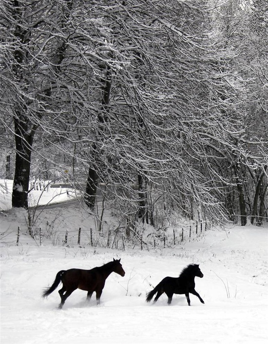 Horses in the snow-covered field in Kaltenbach, Germany. (Wolfgang Rattay / Reuters)