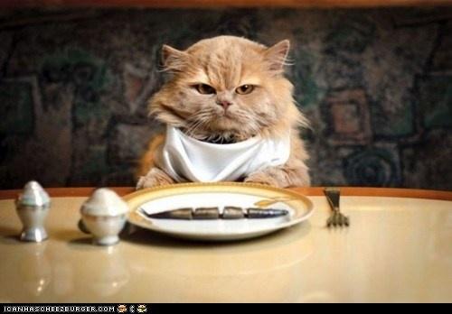 Grumpy hungry cat.