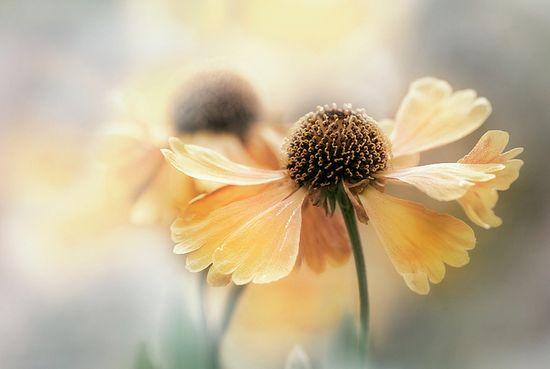 Summer softness..........
