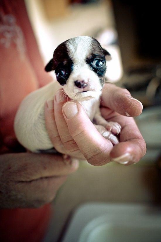 #precious shelter dogs