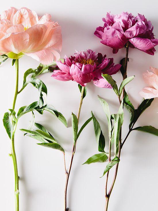 Rose hued sprigs #flowers