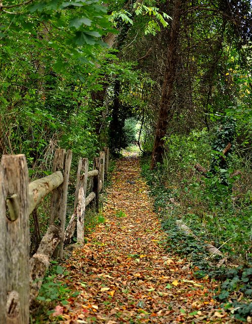 Old wooden fence along the path