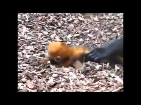 Cute & Funny Baby Animals Collection 2013 - YouTube