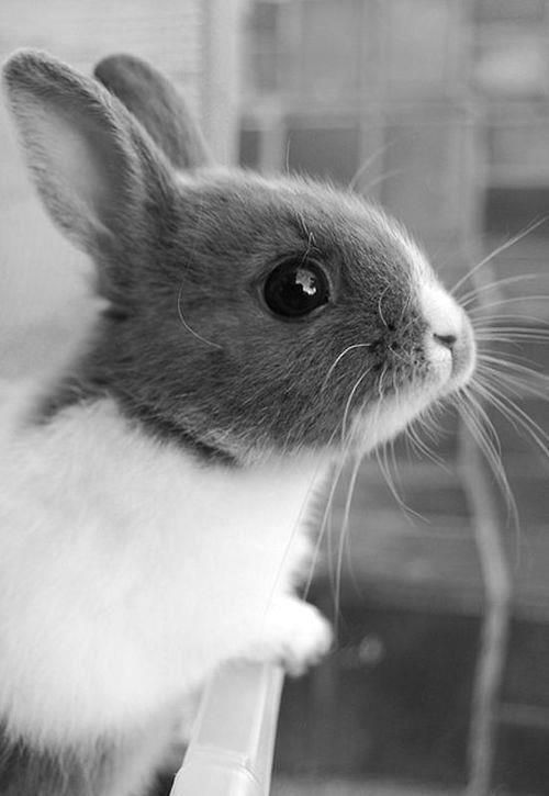 This is our pic of the day in honor of trying to end cosmetic testing on animals.   Read our article about cruelty-free alternative testing methods here: friendsofanimals....