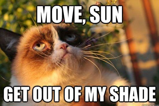 ha Grumpy Cat