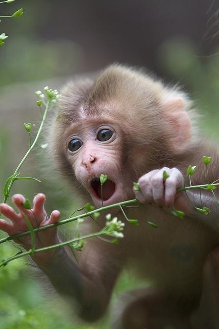 Awestruck monkey