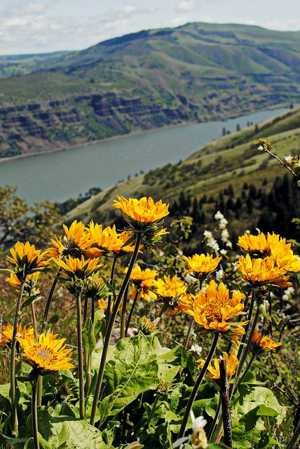 Tom McCall Preserve Eastern Columbia River Gorge