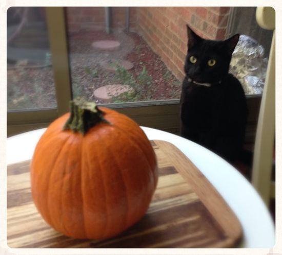#punkin #health #food #fall  How to Make Homemade Pumpkin Puree