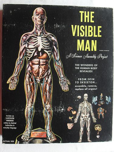 Here's VISIBLE MAN VINTAGE 1960s Model Toy Box. My mom gave me Visible Woman and I think that's what inspired me at 5 yrs old to pursue science. Thank U Mom!