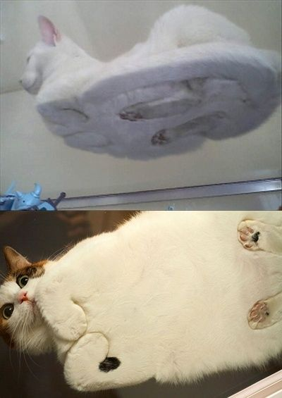Cats on glass. This makes my day, haha
