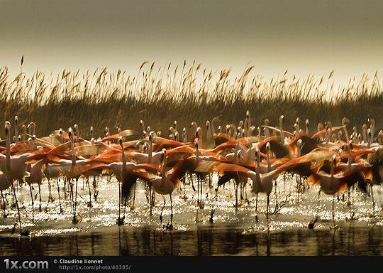 Wild Animals Photo