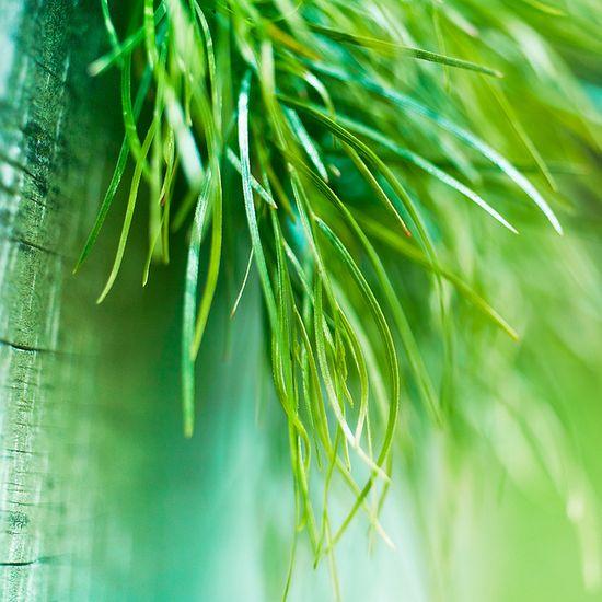 Macro / Grass by ?CubaGallery, via Flickr