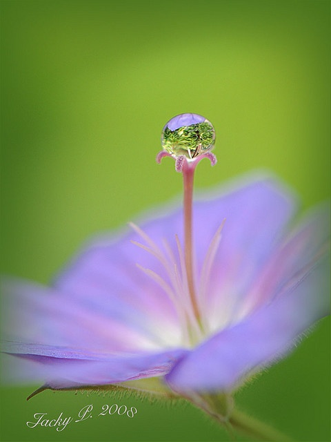 Nature's little gem by Jacky Parker