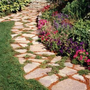 tough plants for paths