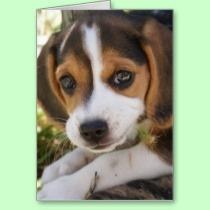 Beagle Baby Dog Greetings