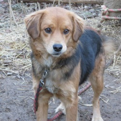 ANGEL is an adoptable Golden Retriever Dog in Cincinnati, OH. PLEASE ADOPT ME!!!!! LOOKING FOR LOVE. WE ARE LOOKING FOR A GOOD HOME FOR THIS BEAUTIFUL SWEET GIRL. WE ARE HELPING TO PLACE HER.  WE ARE ...