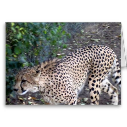 Cheetah Face Greeting Card