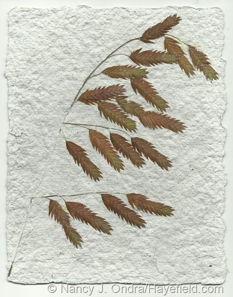 Handmade paper with Chasmanthium latifolium and many other paper making #handmade dovetail joints #handmade house #lose yourself #home depot #handmade valentine cards