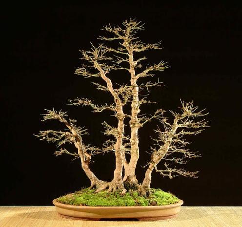 bonsai arts