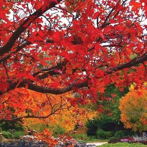 Kansas: Botanica, The Wichita Gardens