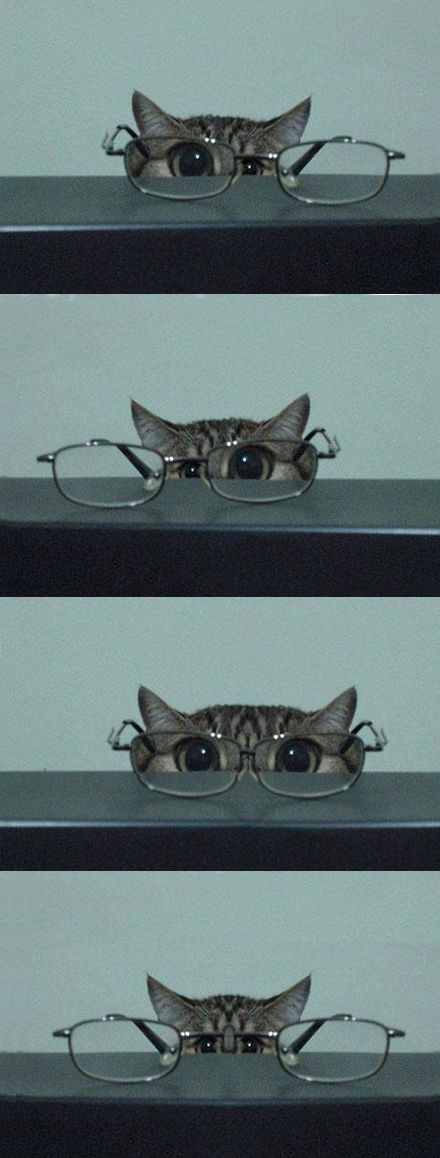 """Eye Exam: """"What's the bottom line say Mr. Whiskers?"""""""